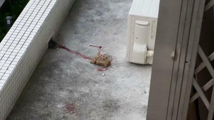 """Animais atirados de edifícios. IACM """"não pode fazer nada"""" por não ter jurisdição"""