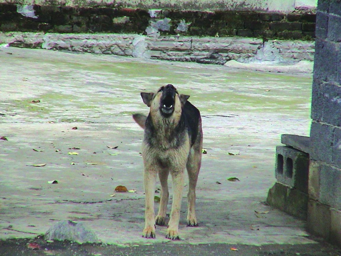 Animais | Estaleiros não têm de esterilizar cães de guarda, diz Governo. Deputados discordam