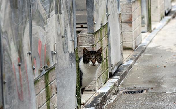 ANIMA | Carta entregue à AL e IACM apelando ao registo de gatos