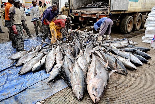 MIF 2015 | PLP querem mais apoios da China no sector da pesca