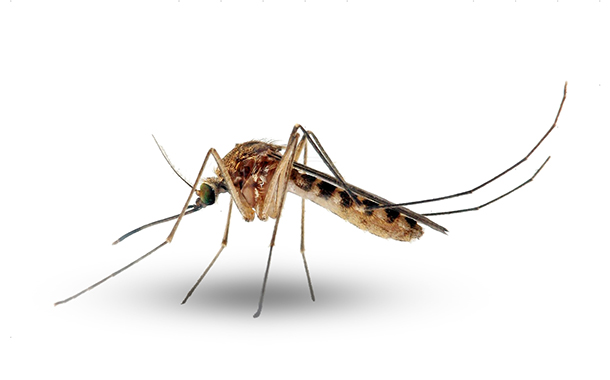 Acentuam-se medidas de prevenção contra dengue e zika