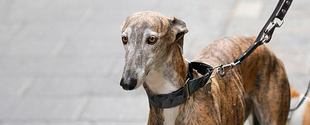 Até 200 cães devem ser transferidos hoje para Coloane