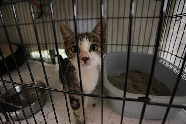 Tufão Hato: Desaparecidos 40 gatos da ANIMA