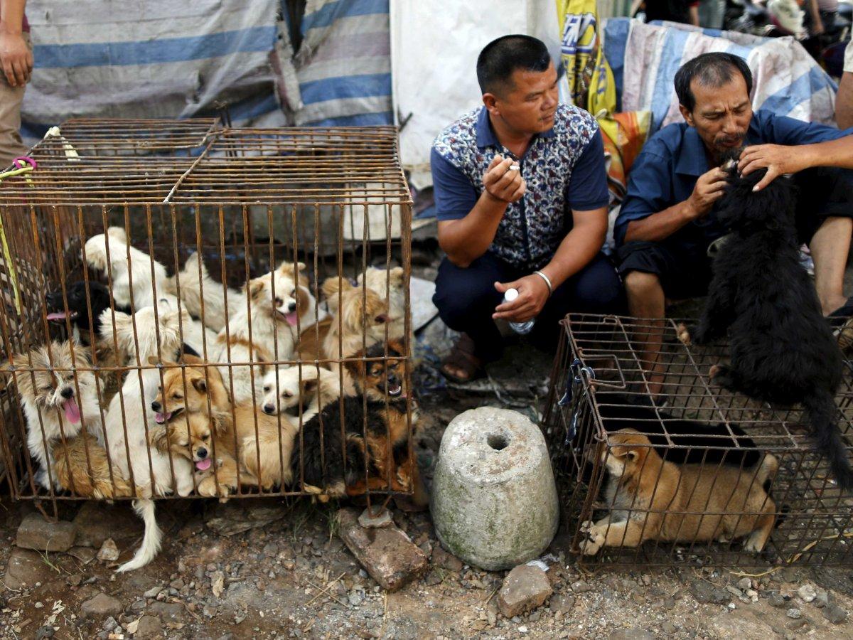 Festival de Carne | Defensores de animais acreditam em mudanças culturais