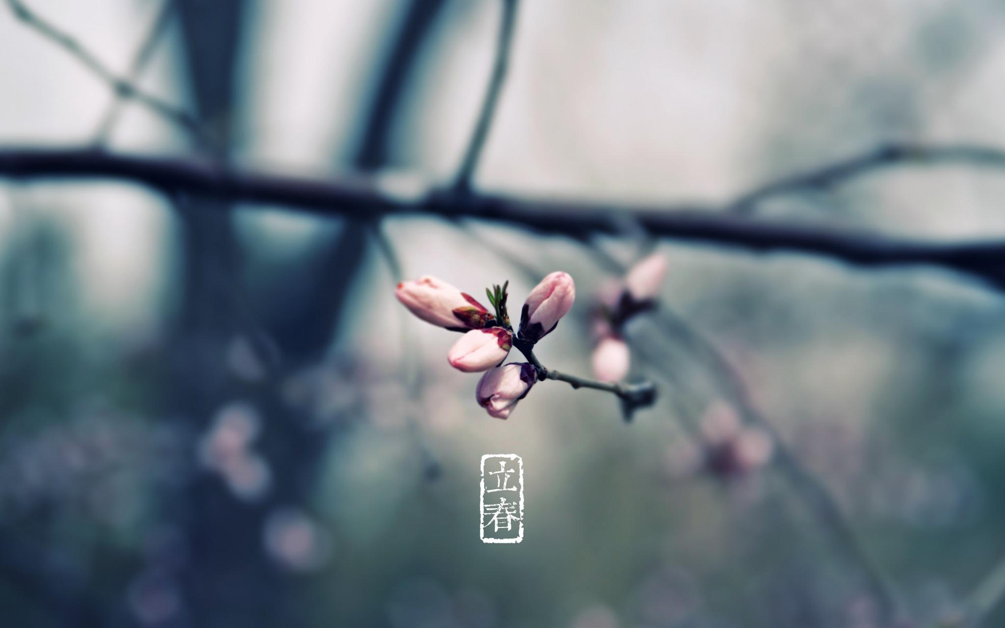 立春 Li Chun – Princípio da Primavera