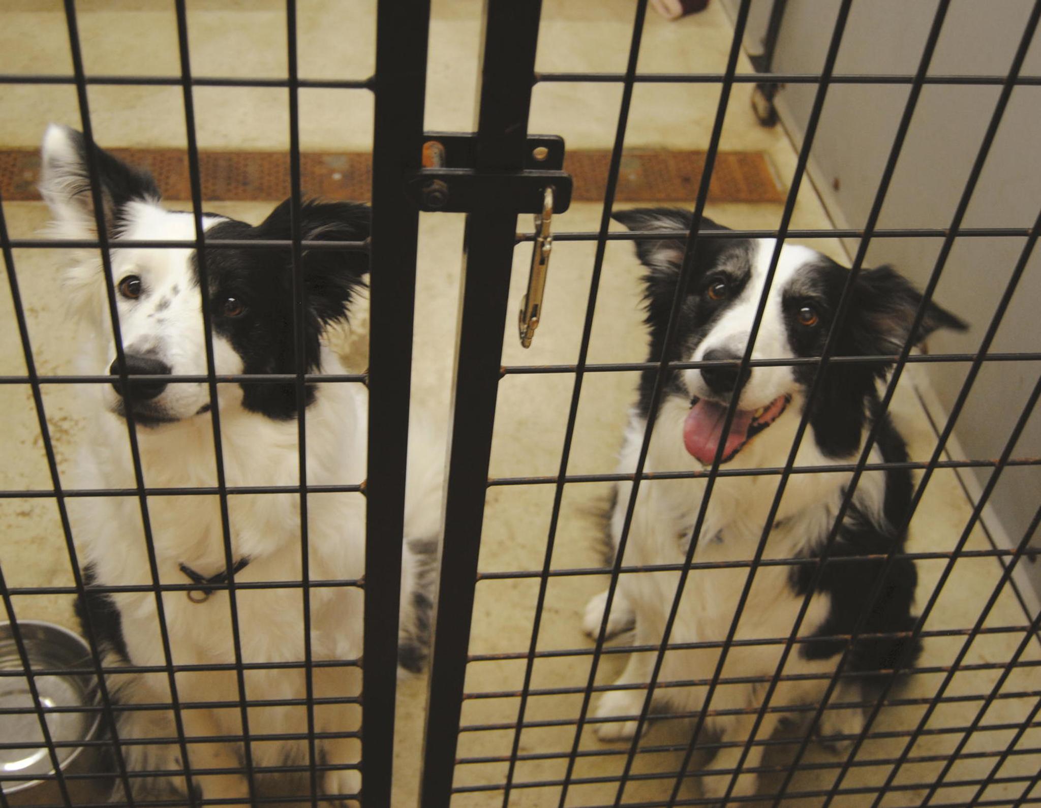 Lei sobre actividade veterinária vai incluir sanções como perda de qualificação