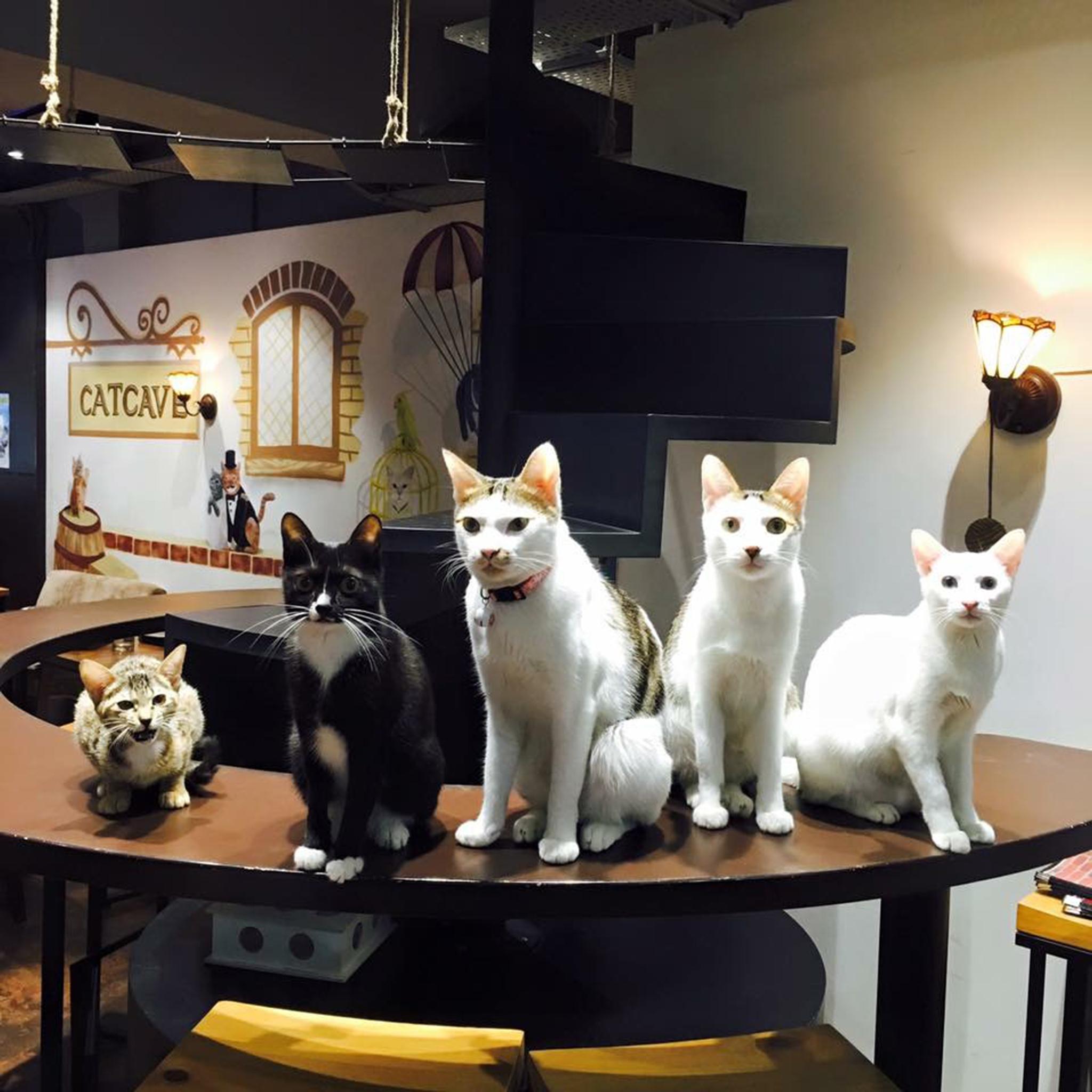 Cat Cave Cafe |Bebe um chá, leva um gato