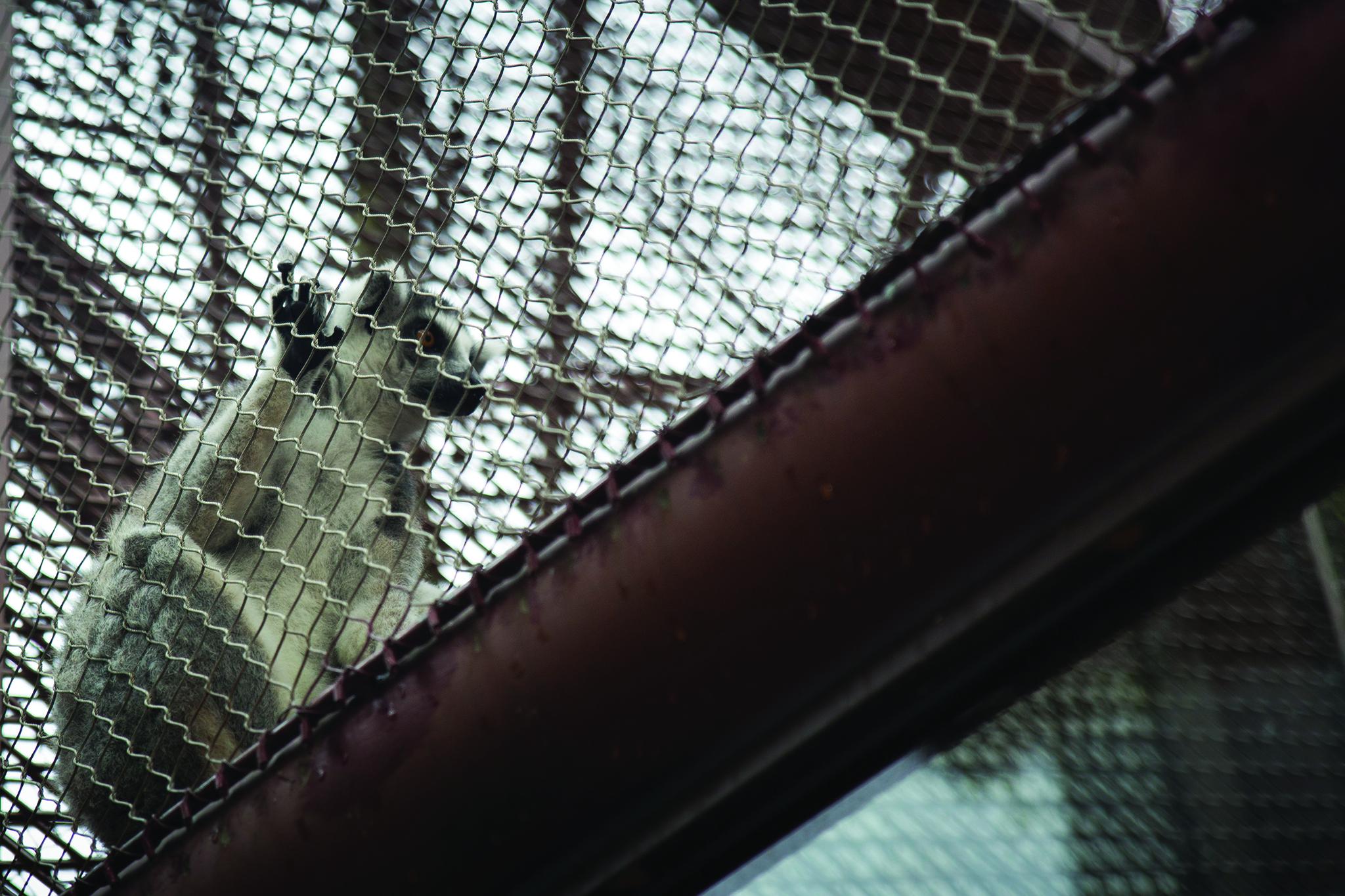 Parque de Seac Pai Van | Animais em condições desiguais