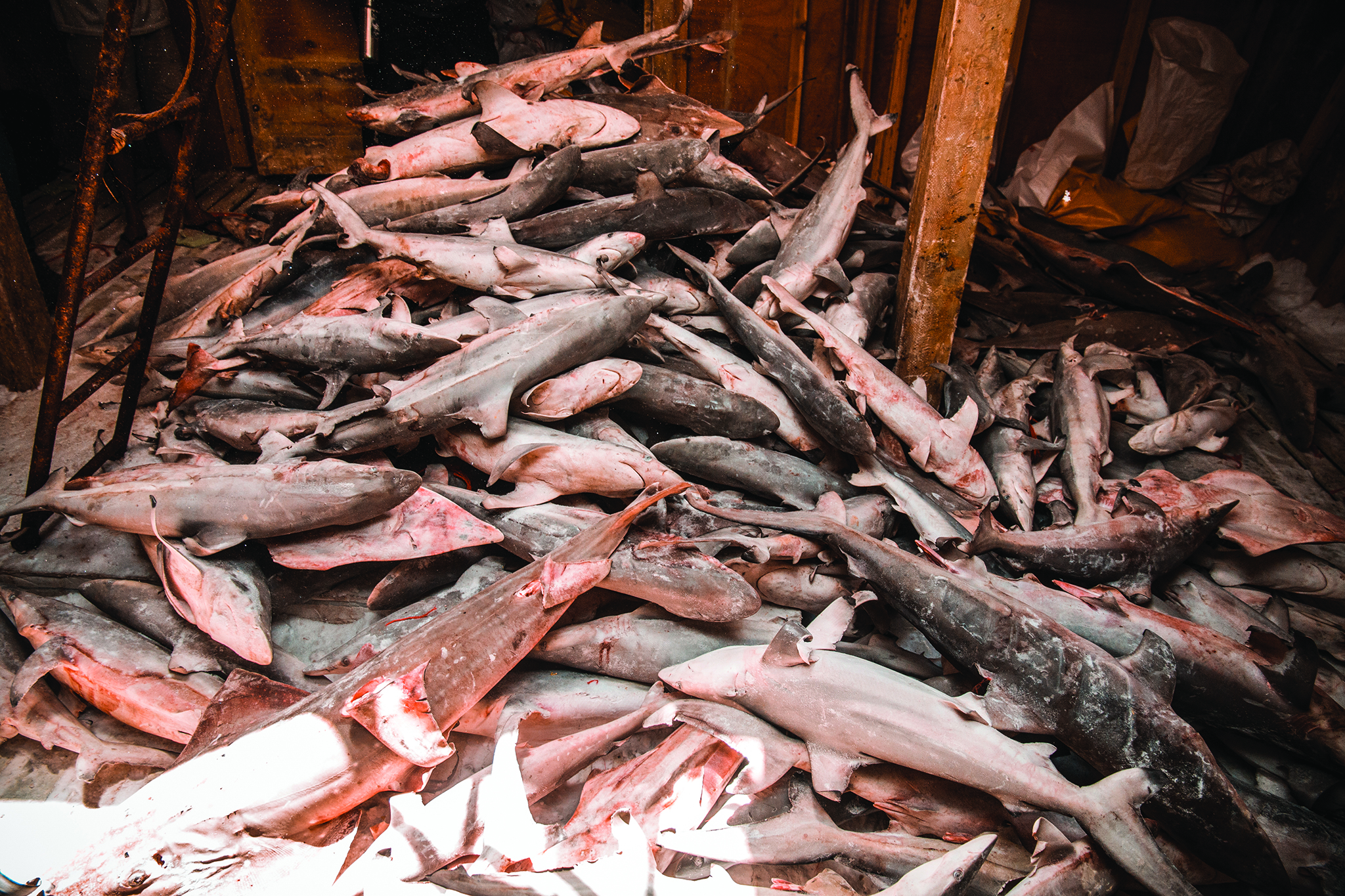 Timor-Leste | Retidos navios chineses que pescaram tubarão