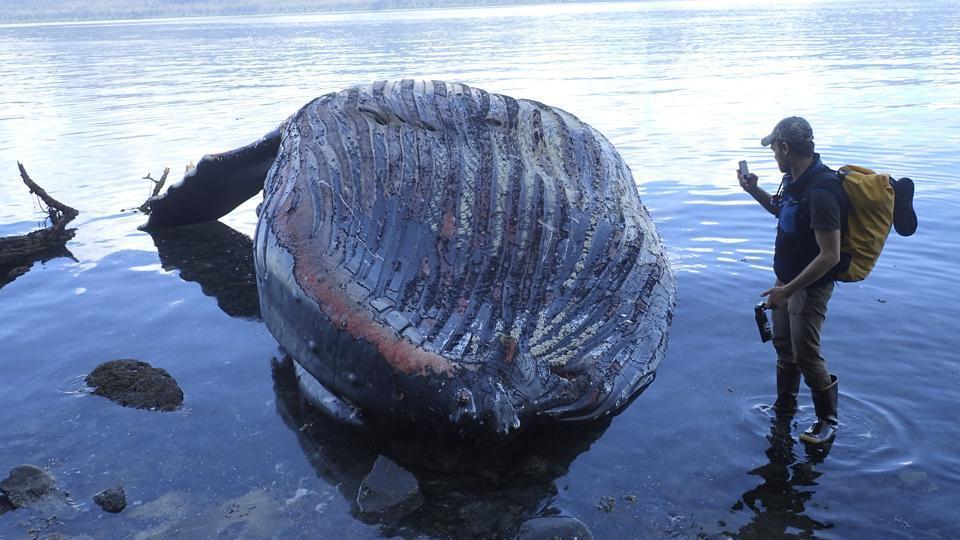 Tailândia | Baleia morre depois de engolir 80 sacos de plástico