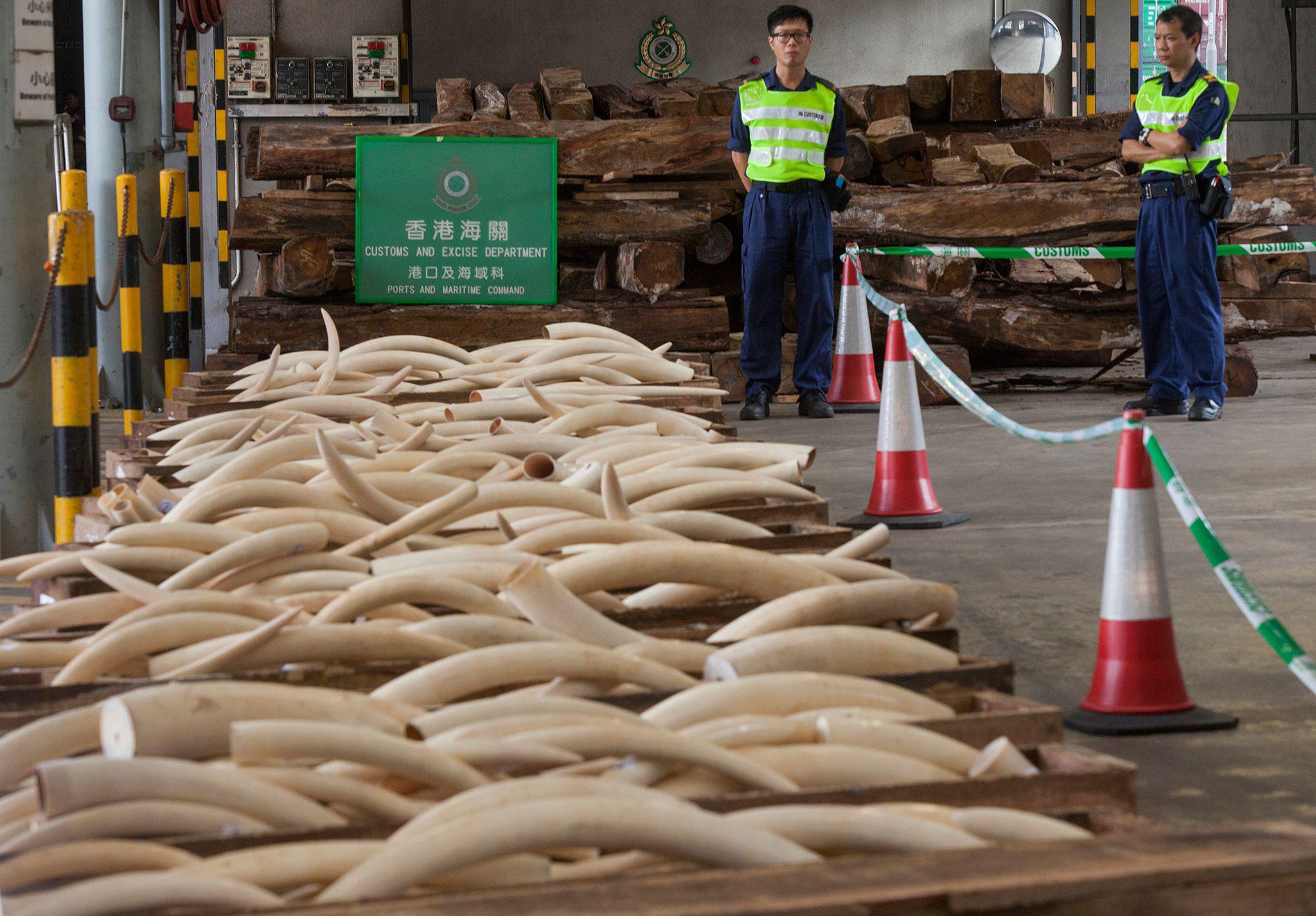 ONG diz que Hong Kong deve fazer mais para combater tráfico de animais