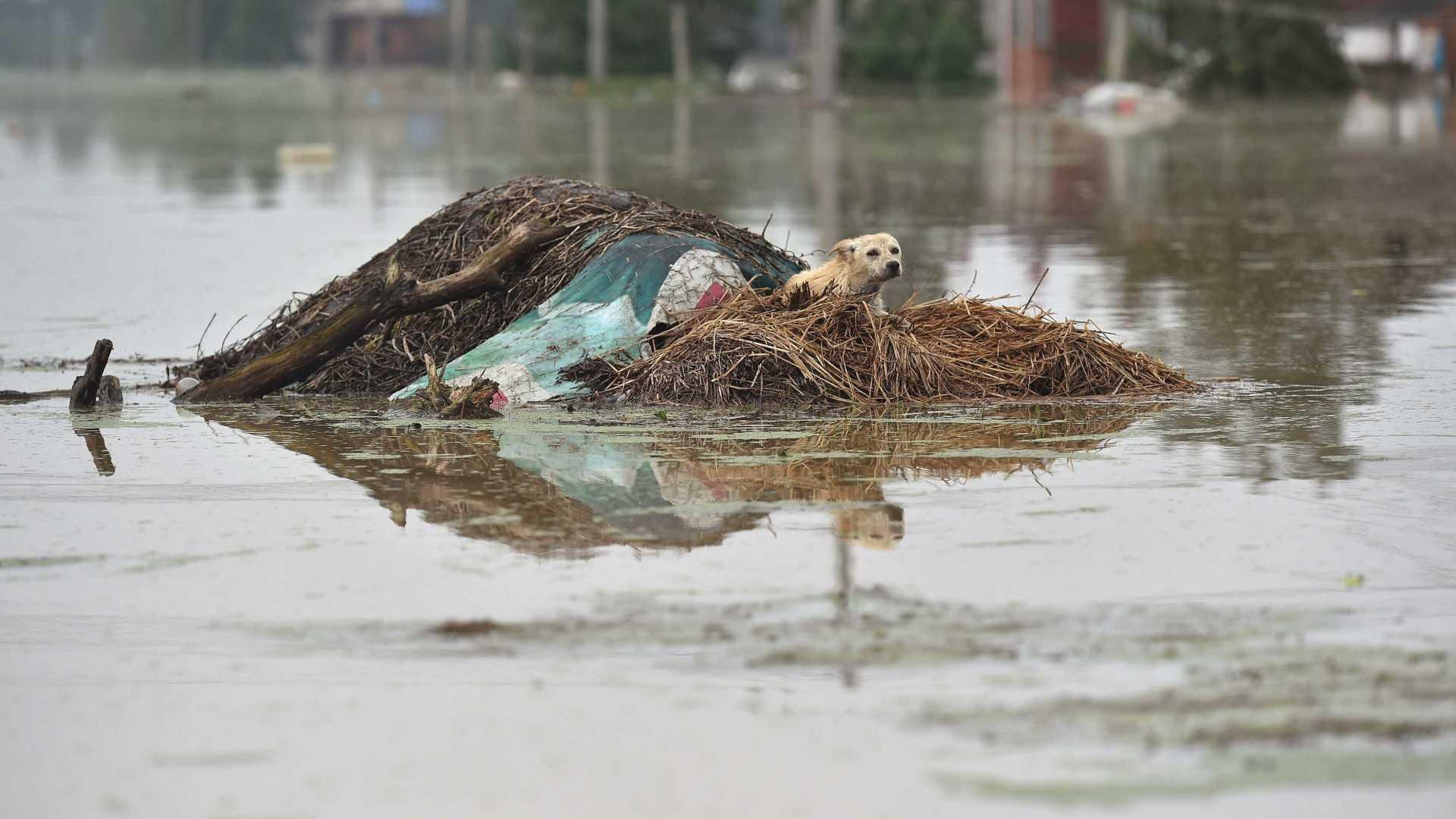 Chuvas | Oito mortos e dois desaparecidos após no noroeste
