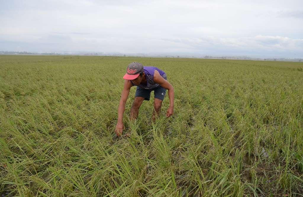 Comércio | Pequim pode comprar mais produtos agrícolas americanos