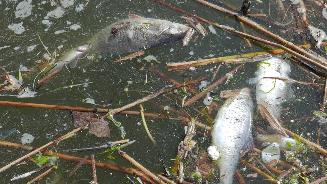 Bacia Norte do Patane | DSAMA retirou 800 quilogramas de peixe morto
