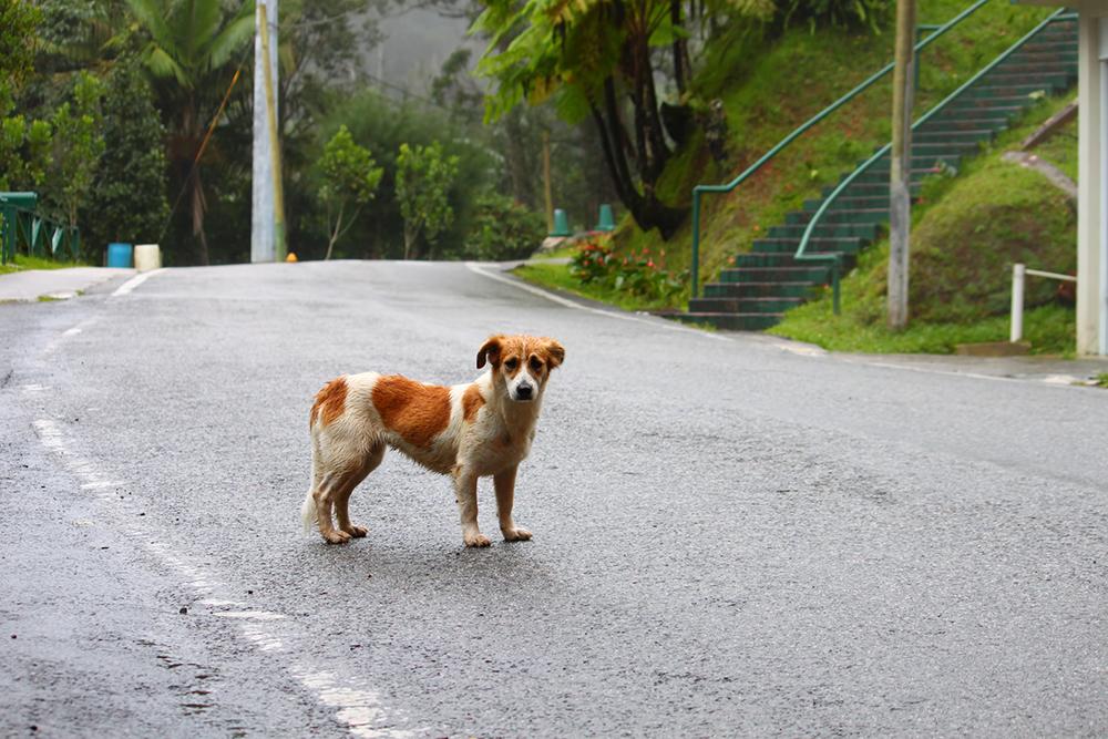 IAM   Cidadãos perturbam trabalhadores que apanham cães vadios