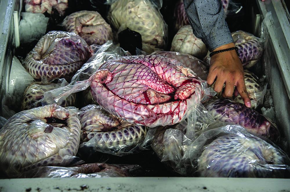 Covid-19 | Shenzhen proíbe permanentemente a criação e consumo de animais selvagens