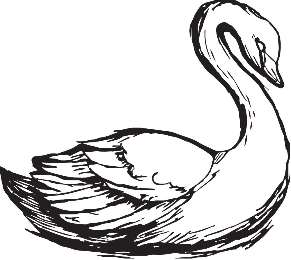 As Aves Brancas