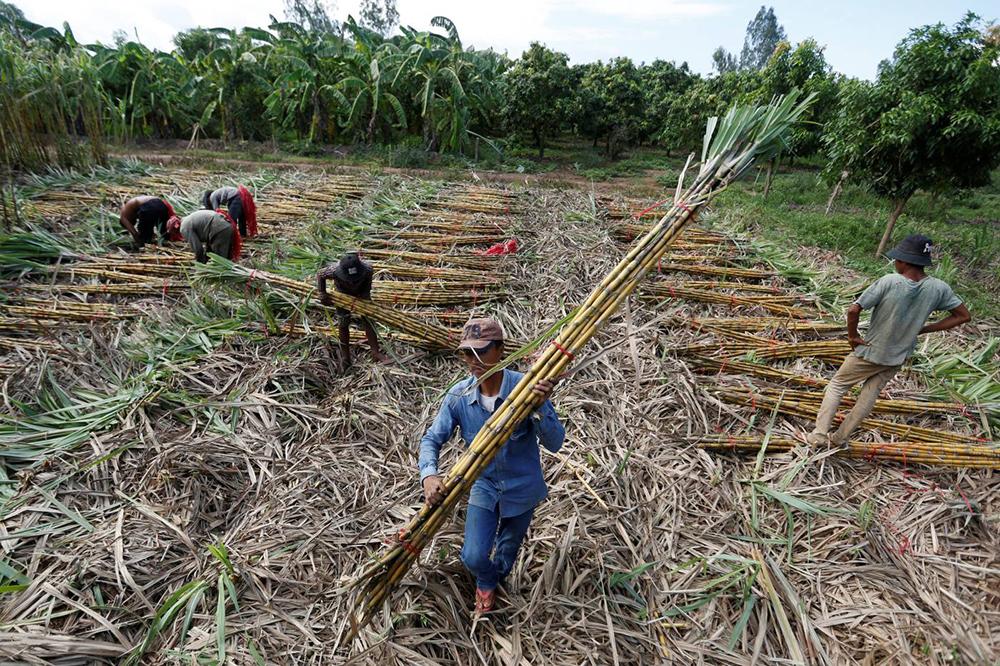 Justiça | Agricultores do Camboja despejados processam grupo Mitr Phol