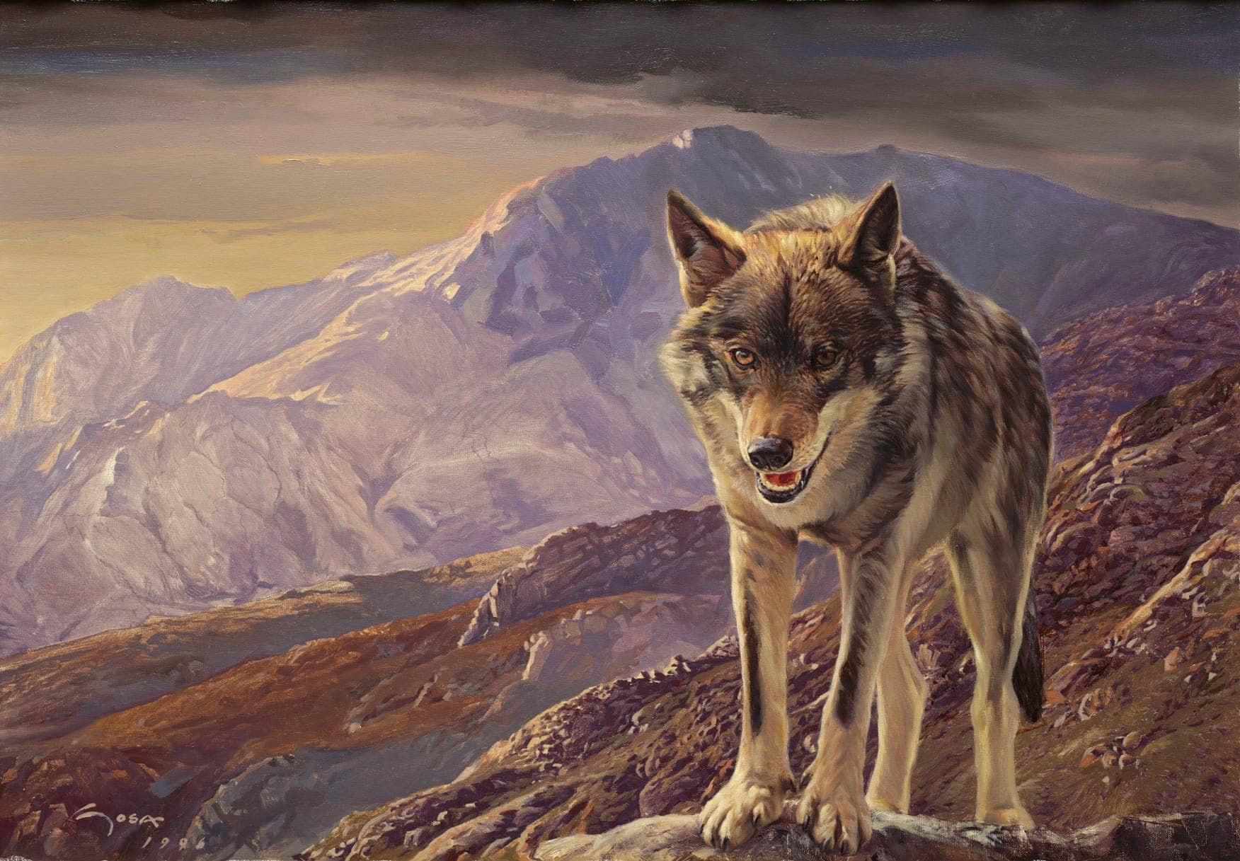 A cultura do lobo