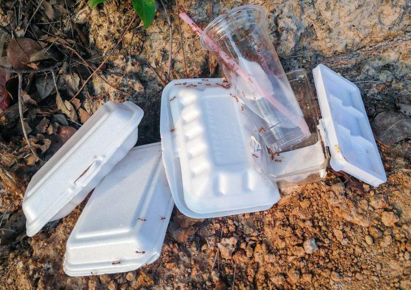 Ambiente   Caixas de esferovite proibidas a partir de Janeiro