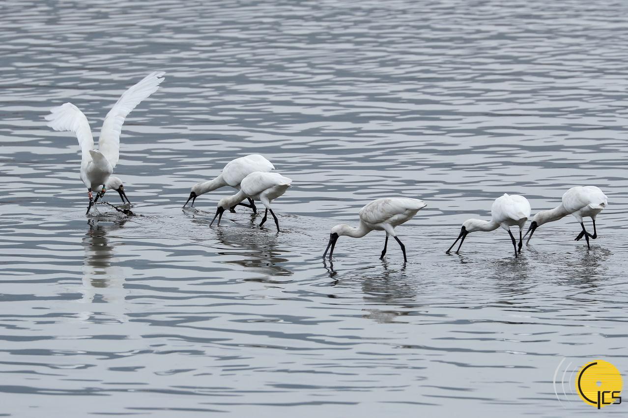 Observação de aves | Inscrições abertas para três actividades ecológicas