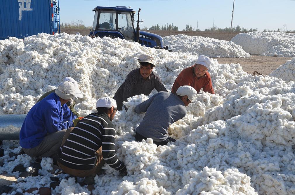 Xinjiang | Organizações locais respondem às sanções e boicotes ocidentais