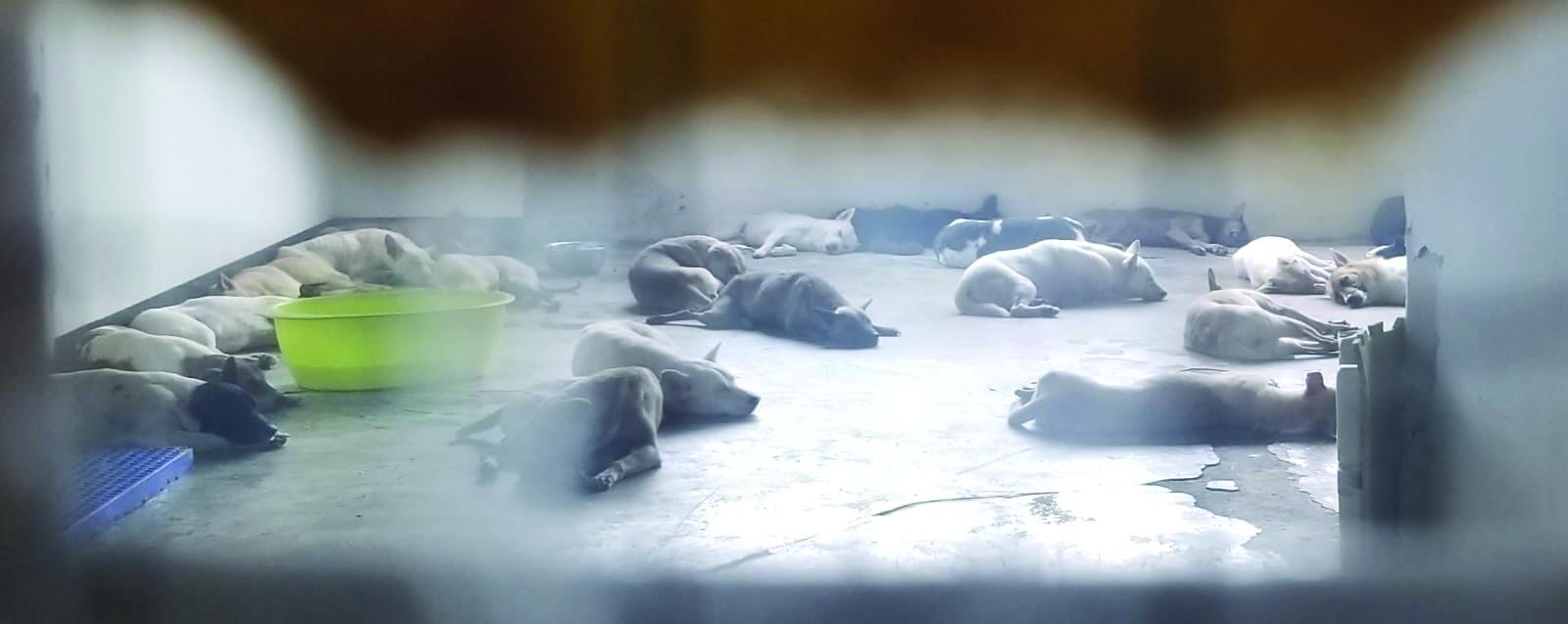 Cães acolhidos em edifício industrial levantam questões de saúde pública