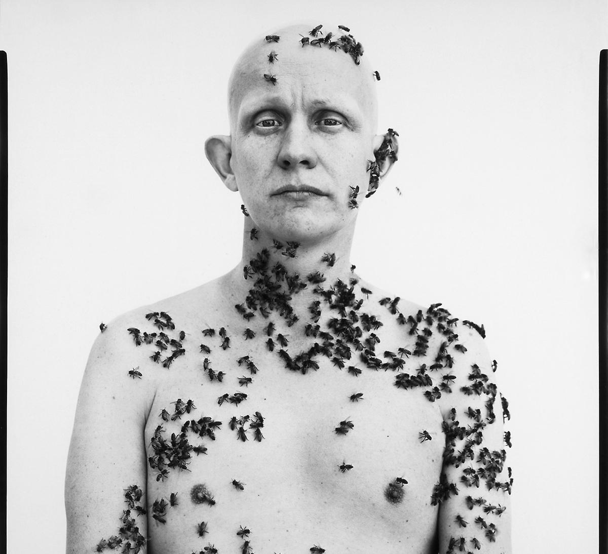 """""""A morte de um apicultor"""" 1"""
