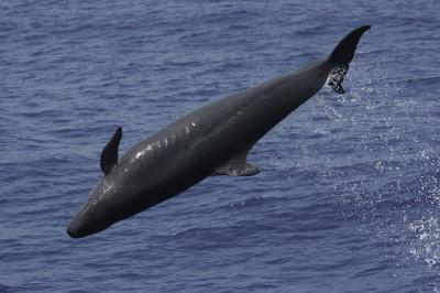 Guarda costeira chinesa resgata nove baleias no leste do país