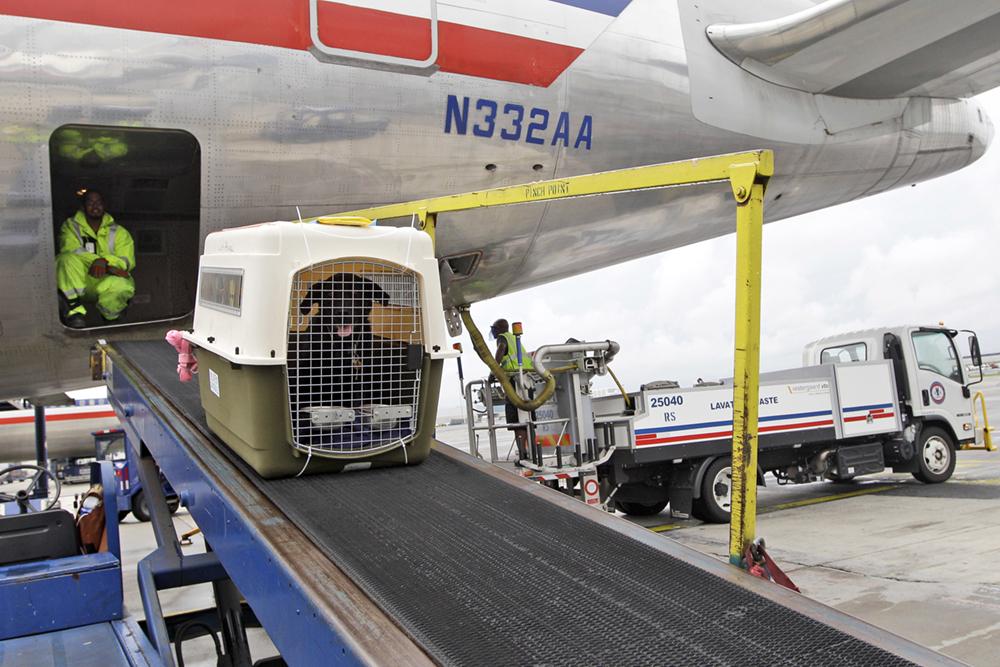 Covid-19 | Preços do transporte aéreo de animaisduplicaram